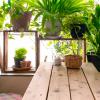 Décoration nature pour la maison