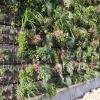 Murs végétalisé - déco d'extérieur