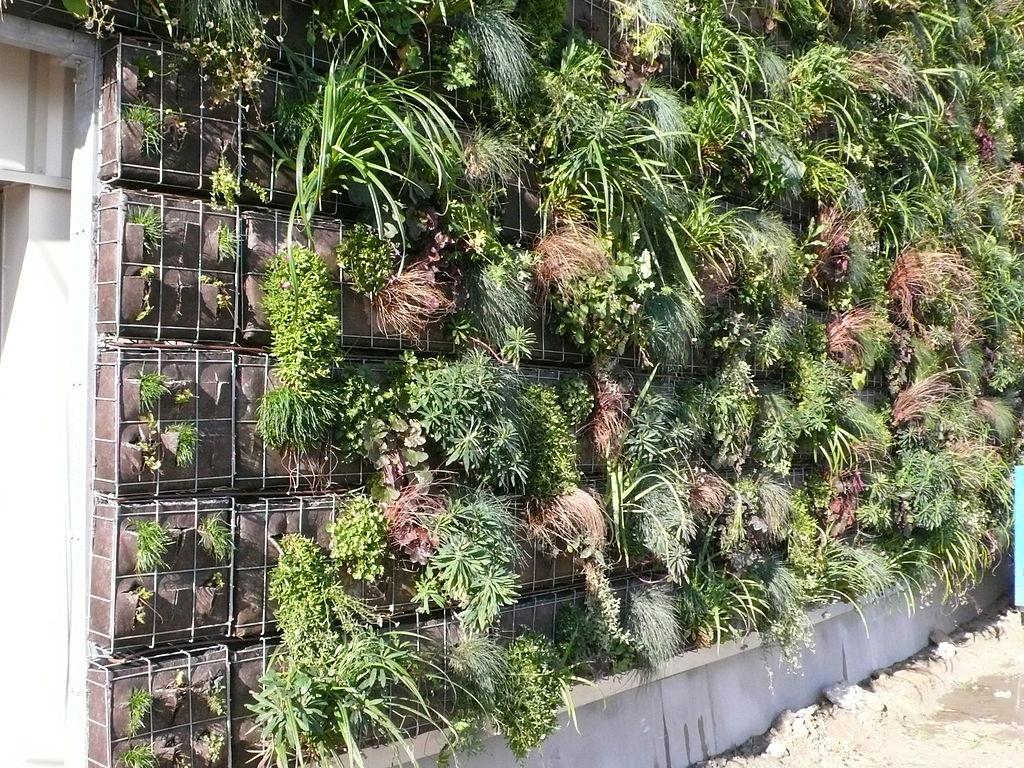 Idee Deco Et Ecolo Pour L Exterieur Le Mur Vegetal Deco Facile